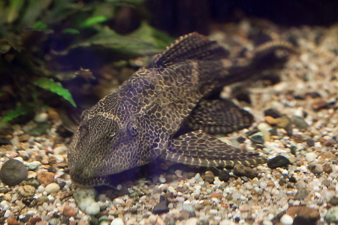 Invasive Species Awareness Week calls attention to problem