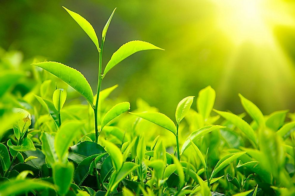 Sunlight is vital to the process of photosynthesis performed by plants which supplies oxygen and glucose needed for the survival of all living beings on the Earth.