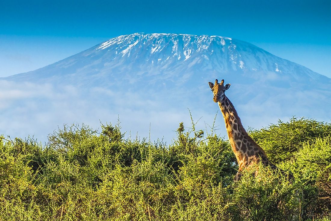 The neck of the giraffe can account for between about 6 to 8 feet of its total height.