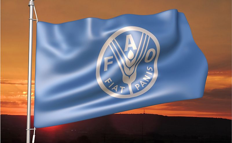 Food and Agriculture Organization (FAO) flag waving against sunset sky.