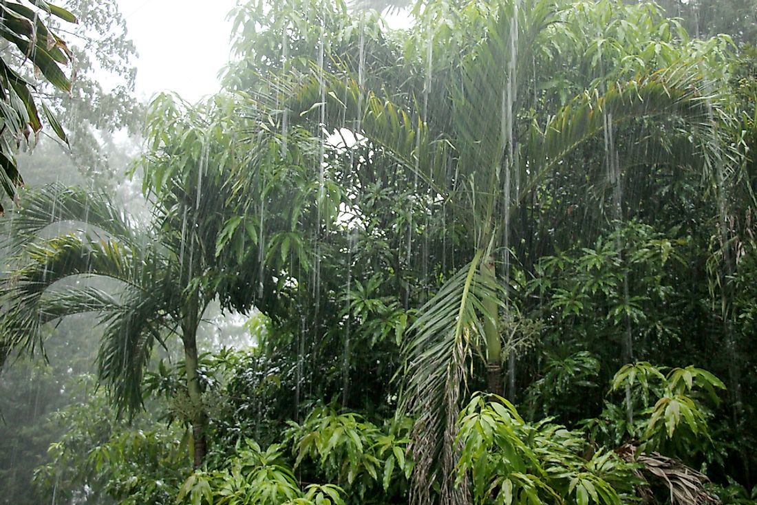 Rain in the Cambodian jungle.