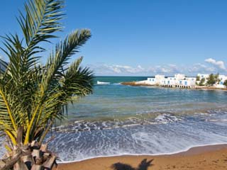 Palm and Beach at Beach Resort on the Mediterranean Coast Near Tipasa, Algeria, North Africa