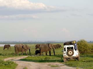 Group of Elephants and Landrover, Chobe National Park, Botswana, Africa