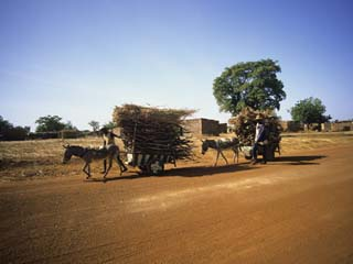 Farmers with Donkey Carts, Burkina Faso, West Africa