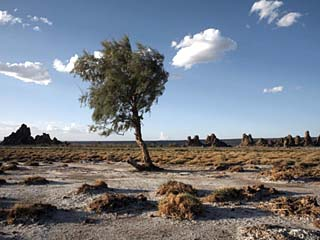 Desolate Landscape of Lac Abbe, Dotted with Limestone Chimneys, Djibouti, Africa