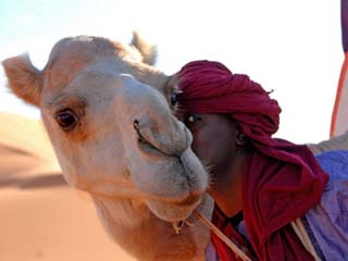 Tuareg and Dromedary, Sebha, Ubari, Libya, North Africa, Africa