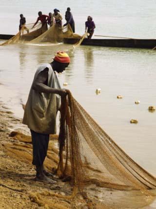 Fisherman Pulling Net Ashore, Niger River, Mali, West Africa, Africa
