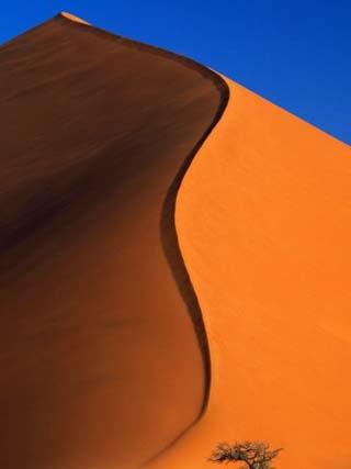 Tree and Sand Dune