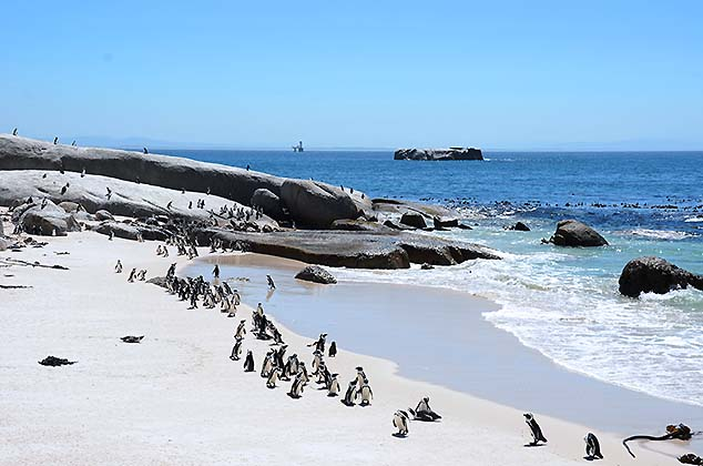 penguin colony south africa