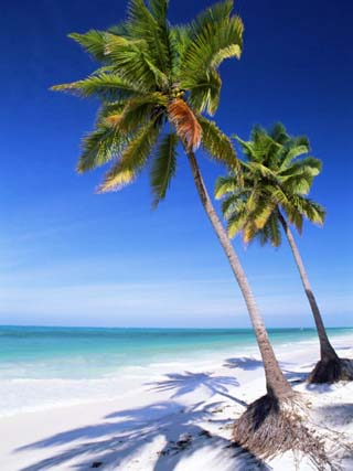 Palm Tree, White Sand Beach and Indian Ocean, Jambiani, Island of Zanzibar, Tanzania, East Africa