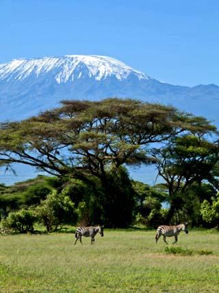 Zebra, Amboseli National Park, With Mount Kilimanjaro in the Background, Kenya, East Africa, Africa