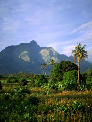 Landscape at Dusk, Tanzania, East Africa, Africa