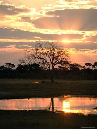 Sunset and Waterhole, Hwange National Park, Zimbabwe, Africa