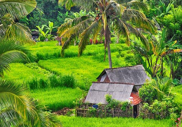 bali scenery