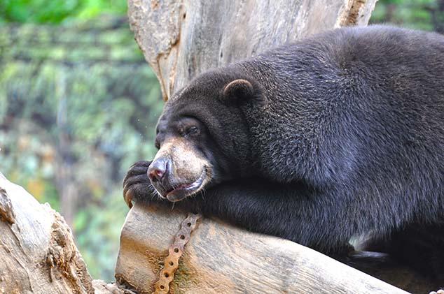 honey bear malaysia