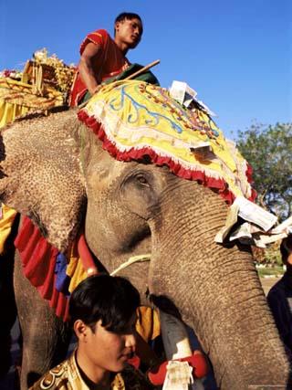 Elephant in Religious Procession, Near Mawlamyine, Myanmar (Burma)