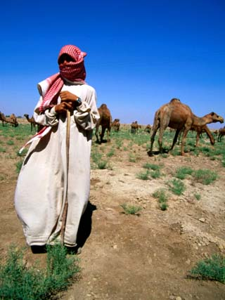 Young Man Herding Camels, Iraq