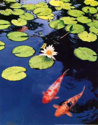Japan national symbols song flags and more for Koi pond music
