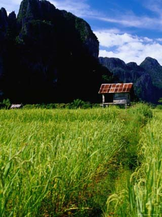 Stilted House Surrounded by Limestone Cliffs and Fields, Vang Vieng, Laos
