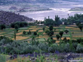 Agriculture Fields, Indus Valley, Pakistan