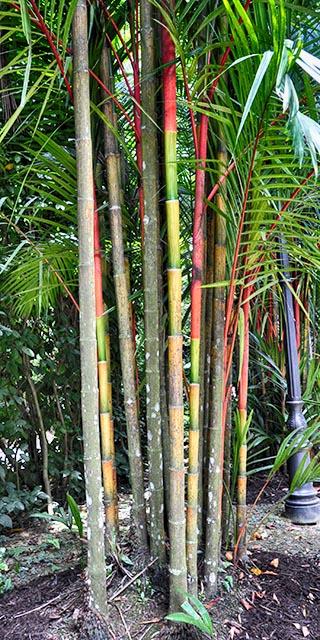 palms singapore