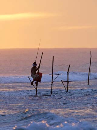 Stilt Fisherman at Weligama, South Coast, Sri Lanka, Asia