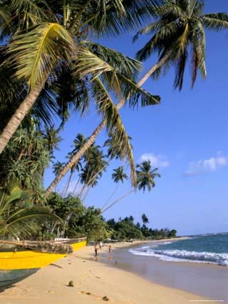 Palm Trees and Beach, Unawatuna, Sri Lanka