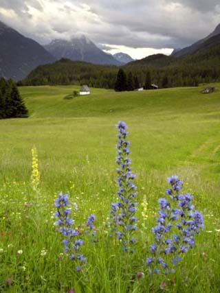 Alpine Meadow, Near Kofels, Umhausen, Otztal Valley, Tyrol, Austria, Europe