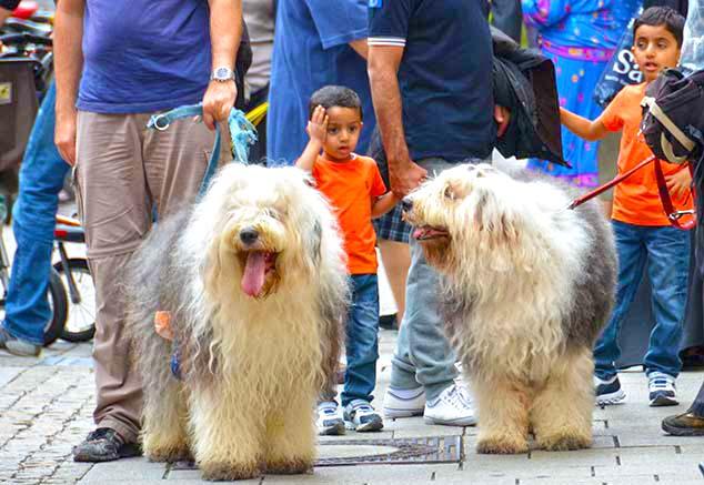 big dogs salzburg