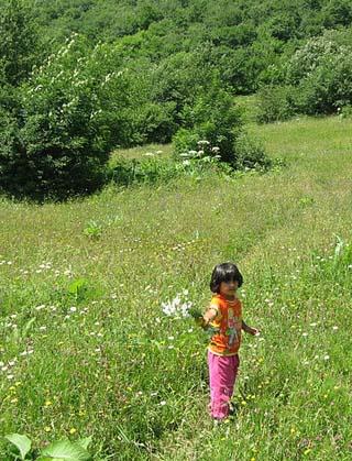 azerbaijan field