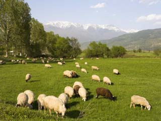 Countryside Near Rila Mountains, Bulgaria, Europe