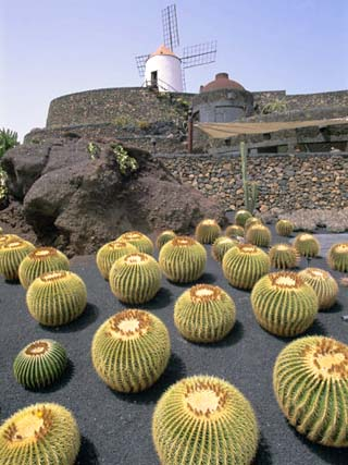 Jardin De Cactus, Near Guatiza, Lanzarote, Canary Islands, Atlantic, Spain, Europe