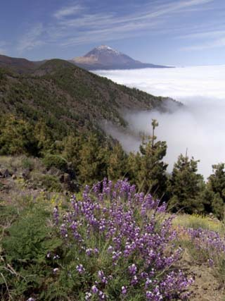 Mount Teide (Pico De Teide), Tenerife, Canary Islands, Spain