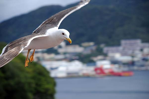 seagull bergen norway