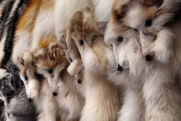 furs for sale helsinki
