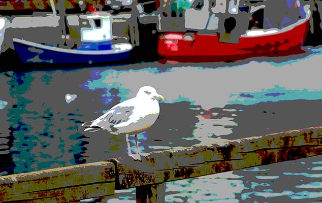 seagull warnemunde germany
