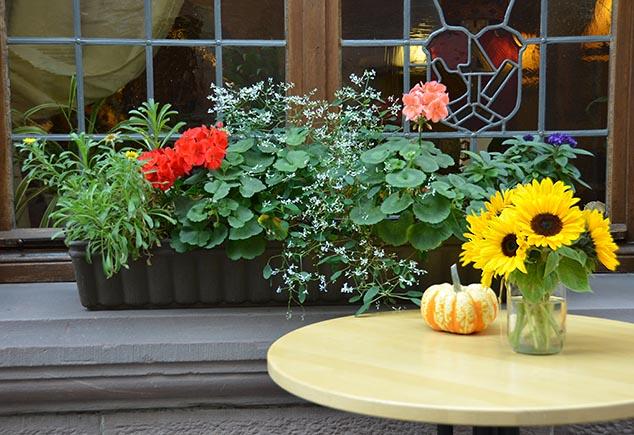 flower box miltenberg germany