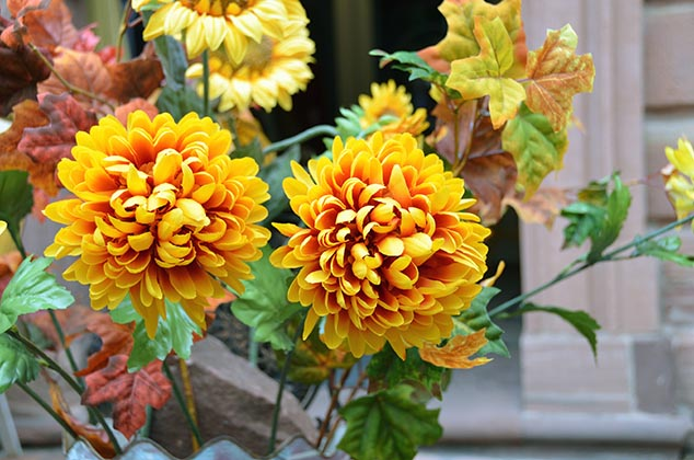 yellow flowers miltenburg