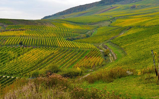 Rudesheim Germany vineyard