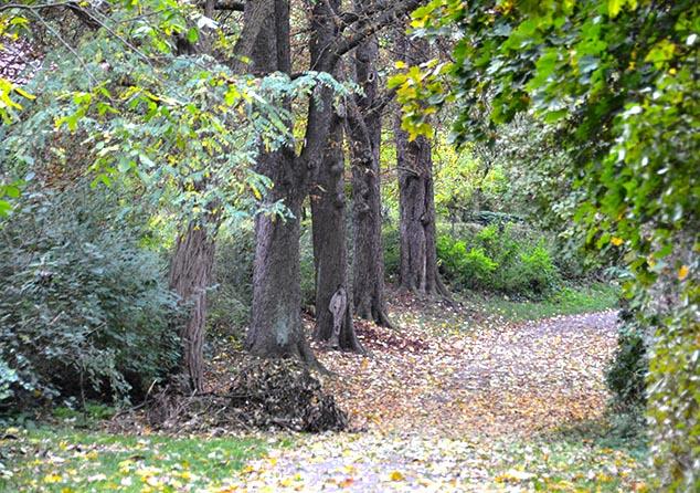 fall trees wurzburg germany