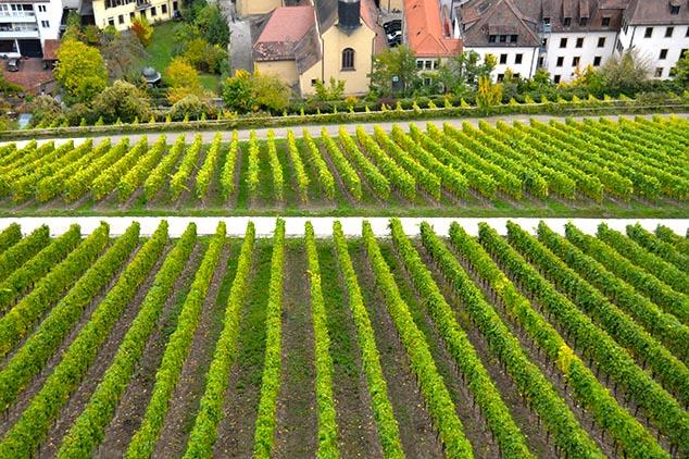 wurzburg germany wine
