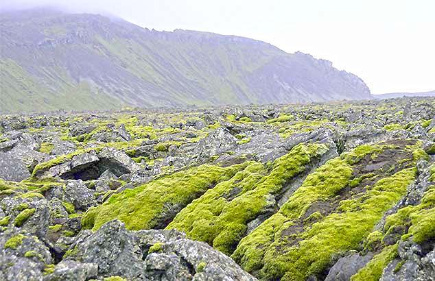 green moss iceland