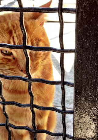 kitty jail rome