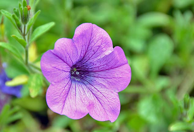 soft purple flower