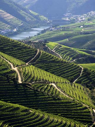 Douro River region