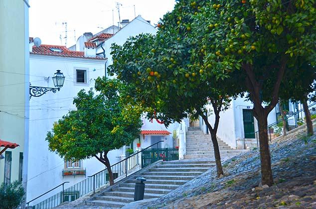 orange trees lisbon