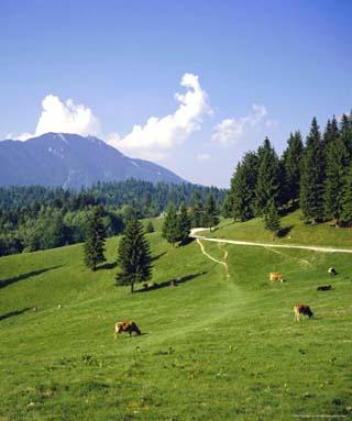 Apline Pastures on the Edge of the Bucegi Mountains, Carpathian Mountains, Transylvania, Romania