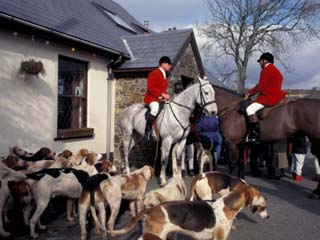 Riders and Hounds Awaiting Fox Hunt, Wales, United Kingdom