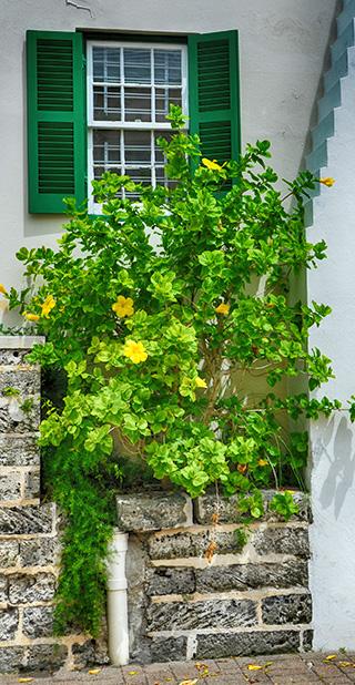 flowers in bermuda