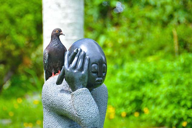thre pigeon bermuda